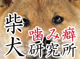 柴犬噛み癖研究所