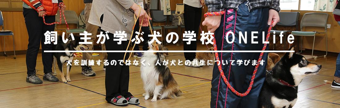 飼主が学ぶ犬の学校