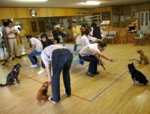 犬のトレーニング実技