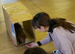 パピークラス(子犬の幼稚園クラス)
