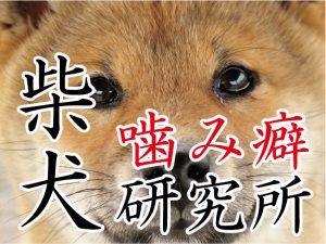 犬の噛みグセ研究所